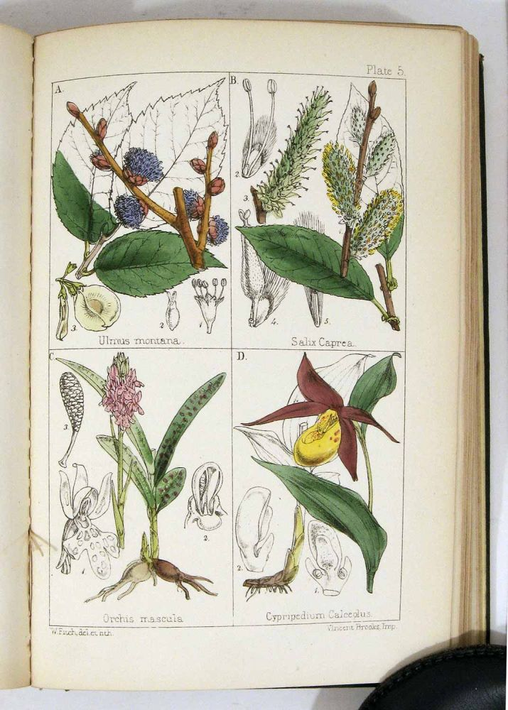 """British Wild Flowers. Familiarly Described in the Four Seasons. For the Use of Beginners and Amateurs. A New Edition of The Field Botanist's Companion"""" BRITISH WILD FLOWERS, Thomas Moore."""