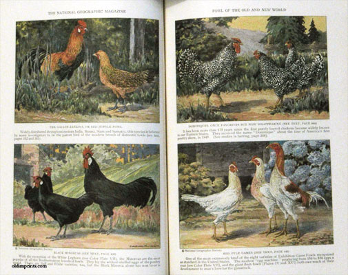 The National Geographic Magazine. 1927 - 04. POULTRY.