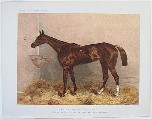 Emblem, Steeplechase Mare. From a portrait sent by the Earl of Coventry. CHROMOLITHOGRAPHS.