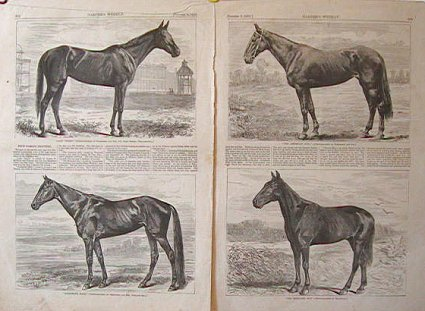 """Four Famous Trotters. """"Lady Thorn."""" """"Goldsmith Maid."""" """"The American Girl."""" """"The Mountain Boy."""" TROTTING HORSES."""