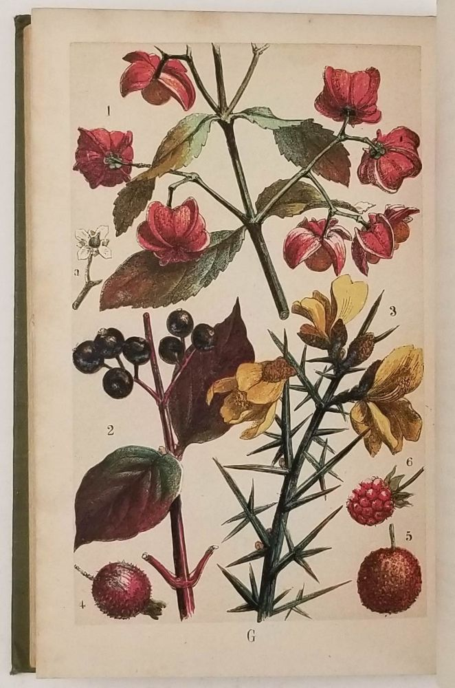 Our Woodlands, Heaths, and Hedges. A Popular Description of Trees, Shrubs, Wild Fruits, etc. with Notices of their Insect Inhabitants. COLOR PLATES, W. S. Coleman.