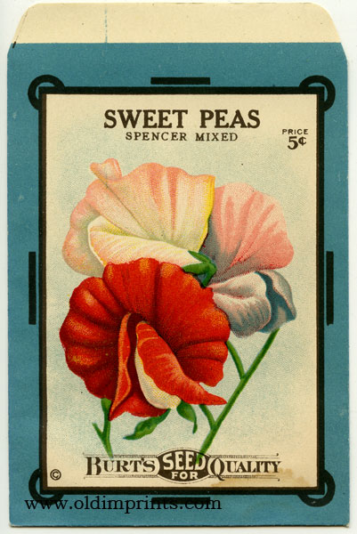Sweet Peas - Spencer Mixed. FLOWER.