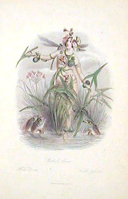Water Arrow. Fleche-D'Eau. Calla palustris. LES FLEURS ANIMEES - FLOWER WOMEN - ANTIQUE COLOR ENGRAVING.