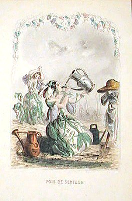 Pois De Senteur. (Sweet Pea). LES FLEURS ANIMEES - FLOWER WOMEN - ANTIQUE COLOR ENGRAVING.
