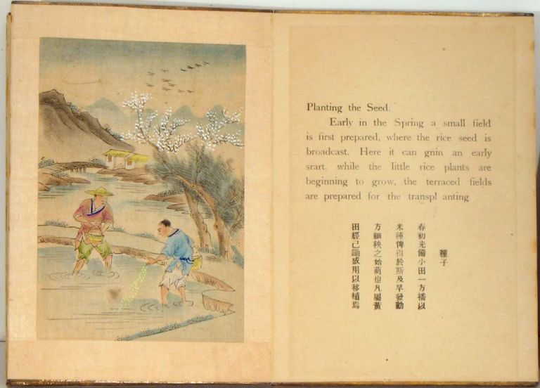 The Story of Rice. CHINA - RICE - WATERCOLOR PAINTINGS.