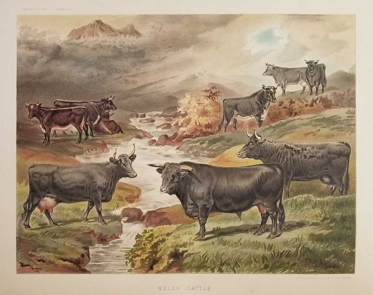 Dairy Farming: Being the Theory, Practice, and Methods of Dairying. CHROMOLITHOGRAPH PLATES - FARMING, J. P. Sheldon.