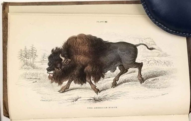 The Naturalist's Library. The Natural History of the Ruminating Animals, Containing Goats, Sheep, Oxen, &c. (Mammalia. Vol. IV. Part II.). RUMINATING ANIMALS - HAND COLORED ENGRAVINGS, Sir William Jardine.