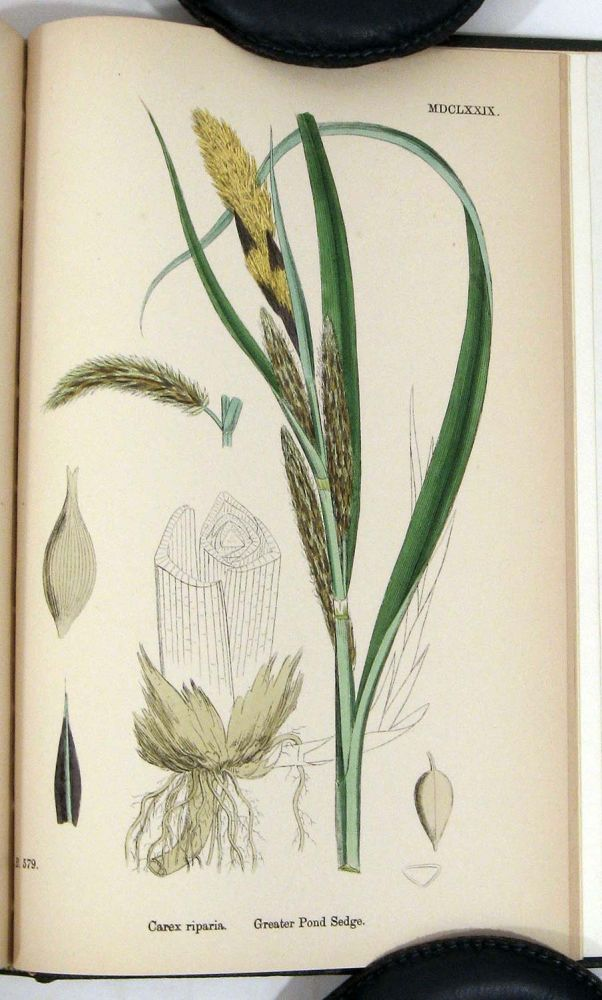 English Botany; or, Coloured Figures of British Plants. Volume X. Juncaceae to Cyperaceae. Cover title: Sowerby's English Botany. BOTANICAL PRINTS, John T. Boswell Syme.