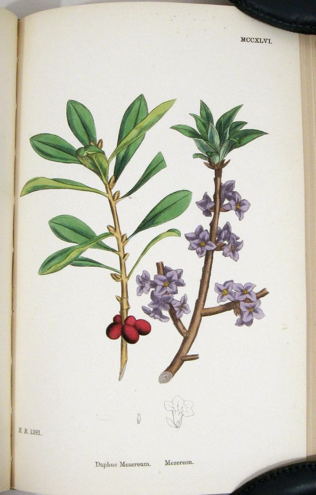 English Botany; or, Coloured Figures of British Plants. Volume VIII. Chenopodiaceae to Coniferae. Cover title: Sowerby's English Botany. BOTANICAL PRINTS, John T. Boswell Syme.