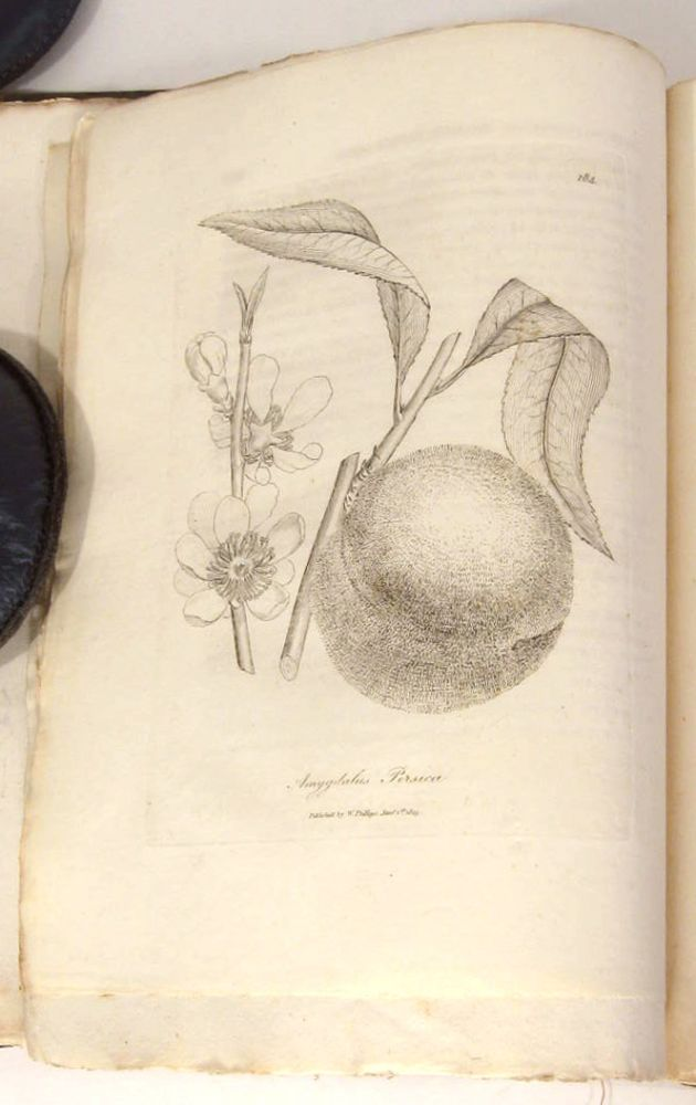 Medical Botany: Containing Systematic and General Descriptions, with Plates of all the Medicinal Plants, Indigenous and Exotic, Comprehended in the Catalogues of the Materia Medica...Second Edition. Vol. III. MEDICINAL PLANTS, William Woodville.