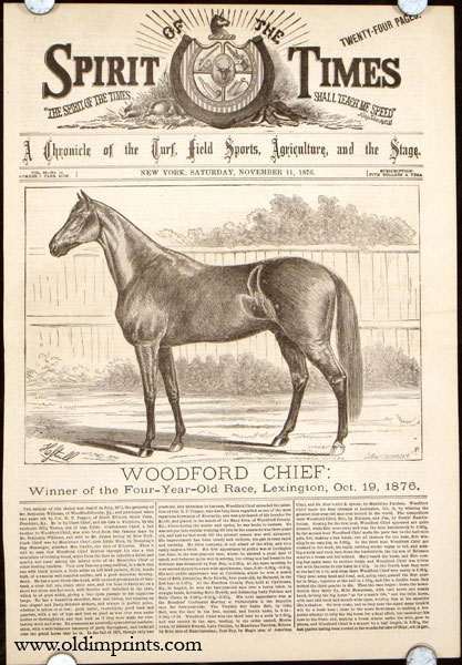Woodford Chief: Winner of the Four-Year-Old Race, Lexington, Oct. 19, 1876. HORSE RACING.
