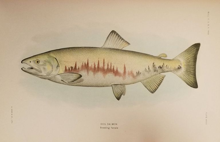 The Fishes of Alaska. From Bulletin of the Bureau of Fisheries. Volume XXVI, 1906
