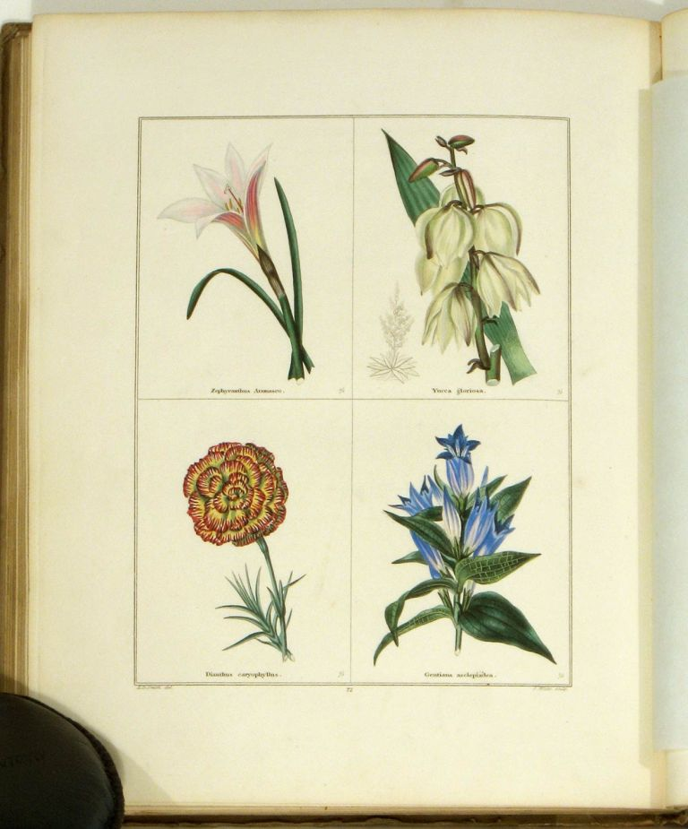 The Botanic Garden: Consisting of Highly Finished Representations of Hardy Ornamental Flowering Plants, Cultivated in Great Britain... Part VI. (Maund's Botanic Garden). HANDCOLORED ENGRAVINGS, Benjamin Maund.