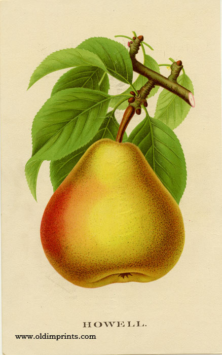 Howell (PEAR). CHROMOLITHOGRAPH - AMERICAN.