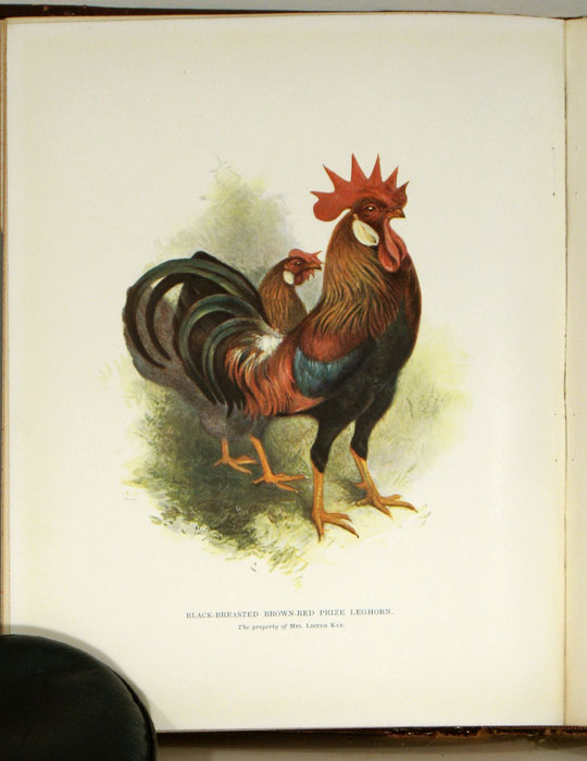 Our Poultry and All About Them: Their Varieties, Habits, Mating, Breeding, Selection and Management for Pleasure and Profit. POULTRY / HARRISON WEIR.