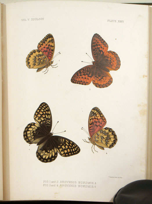 Report Upon Geographical and Geological Explorations and Surveys West of the One Hundredth Meridian, in Charge of First Lieut. Geo. M. Wheeler, Corps of Engineers, U.S. Arm. Chapters VII through XIV (Entomology). ENTOMOLOGY - WESTERN UNITED STATES.
