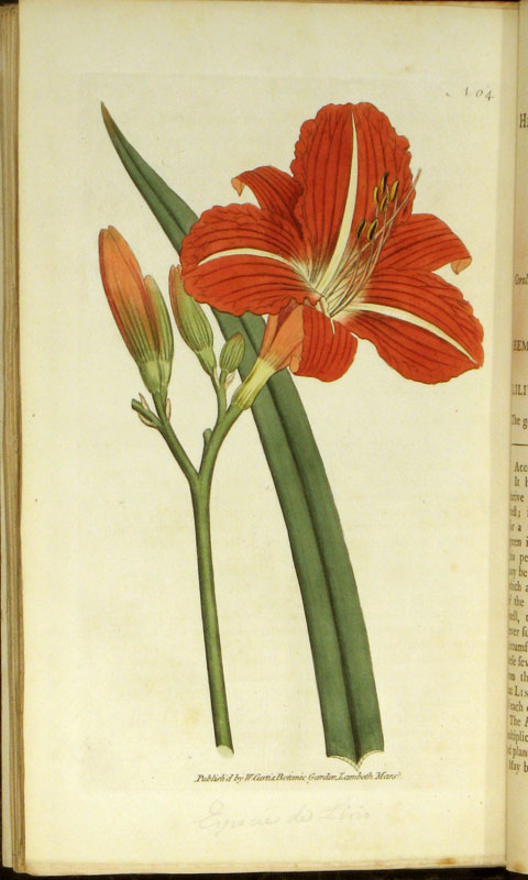 The Botanical Magazine; or Flower-Garden displayed. William HANDCOLORED ENGRAVINGS Curtis.