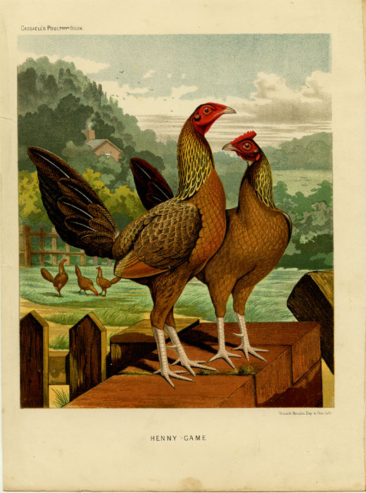 Henny Game. CASSELL'S CHROMOLITHOGRAPHS.
