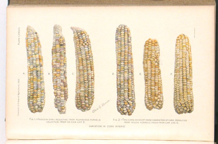Yearbook of the United States Department of Agriculture. 1902. PEACHES AGRICULTURE - CHROMOLITHOGRAPHIC PLATES - APPLES, ALMONDS etc.