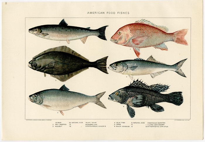 American Food Fishes. FISH.