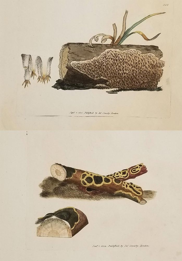 Five handcolored engravings of fungi from an early nineteenth century publication. FUNGI - GREAT BRITAIN.