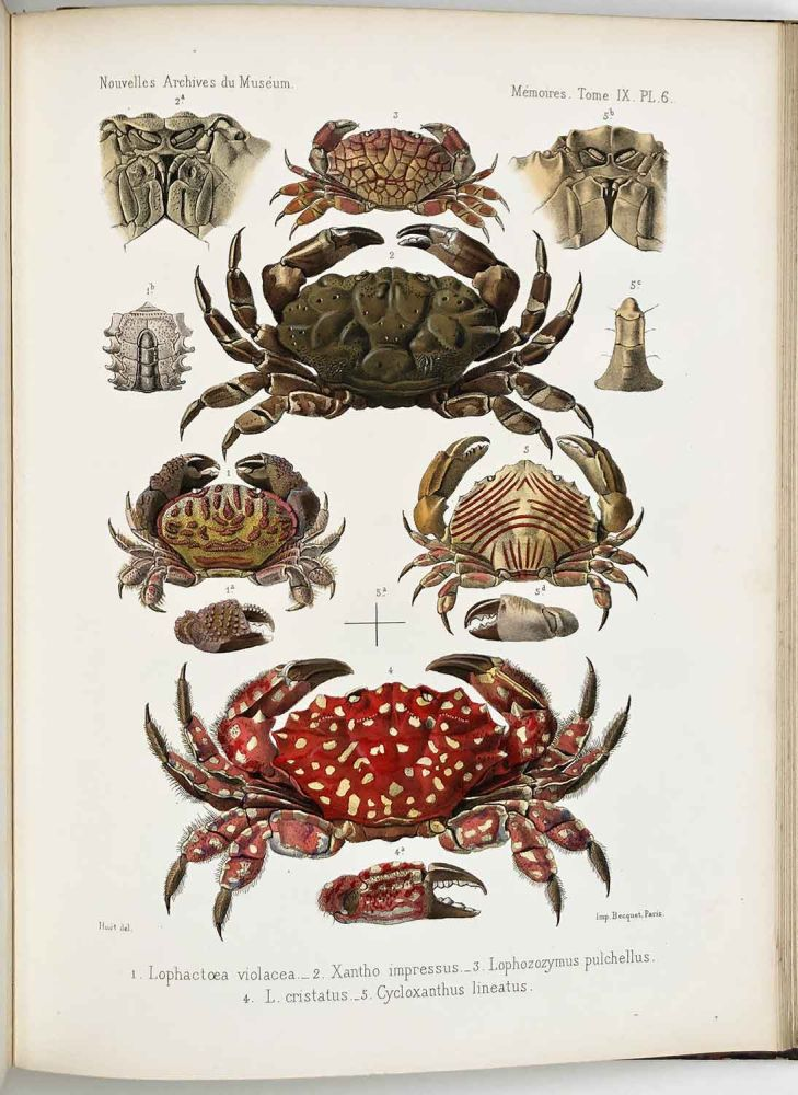 Nouvelles Archives du Museum D'Histoire Naturelle de Paris. Tome Neuvieme. COLOR LITHOGRAPHS - FISH - CRABS - BIRDS etc., L. Guerin, M. L'Abbe Armand David.