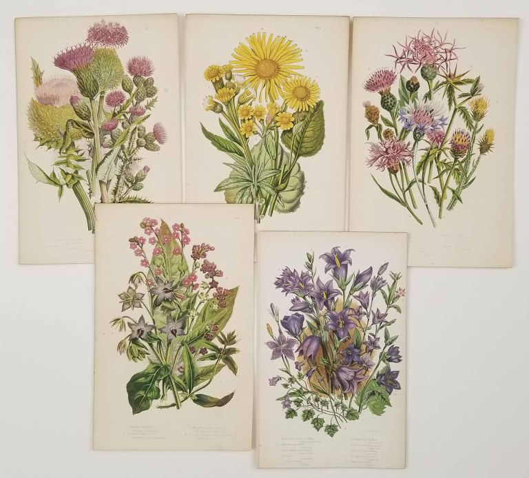 The Flowering Plants of Great Britain. BOTANICAL COLLECTION - FIVE ANTIQUE COLOR PRINTS.