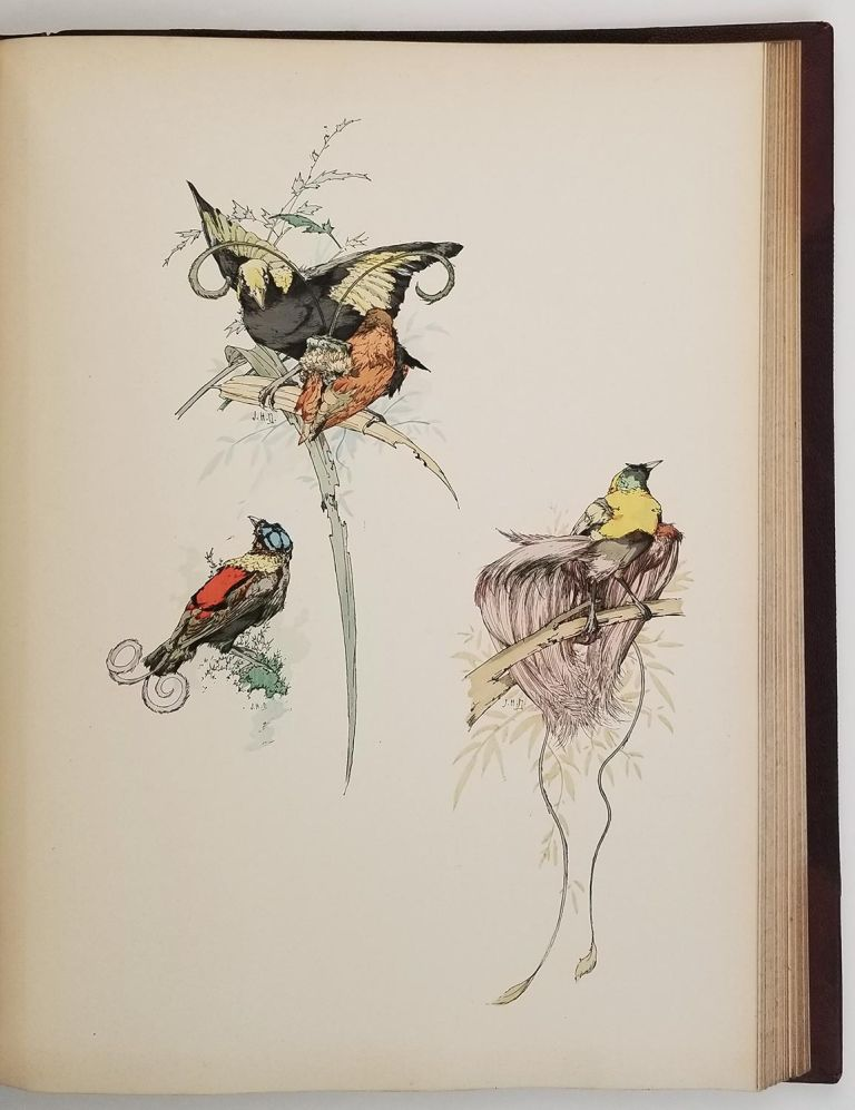 Art and Letters. An Illustrated Review. Second Volume. [with article Birds of Paradise, and much more]. BIRDS OF PARADISE - FRENCH PAINTERS.