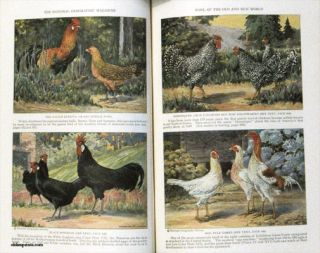 The National Geographic Magazine. 1927 - 04. POULTRY