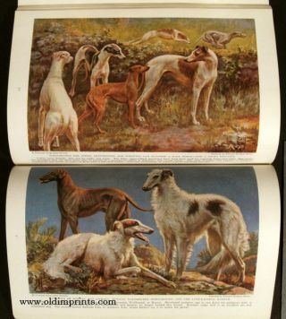 The National Geographic Magazine. 1937 - 10. DOGS
