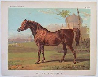 Goldie, High Class Arab. CHROMOLITHOGRAPHS.