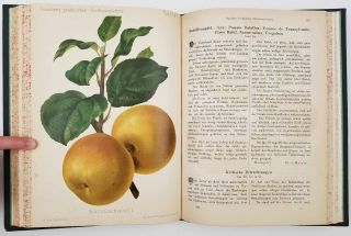 Gauchers Praktischer Obstbaumzuchter. CHROMOLITHOGRAPHS OF FRUIT, N. Gaucher