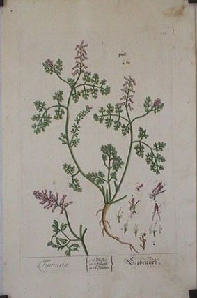 Fumaria (from A Curious Herbal). EIGHTEENTH CENTURY hand colored botanical engraving.