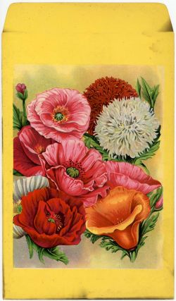 Mixed flower seed packet (UNUSED). FLOWERS