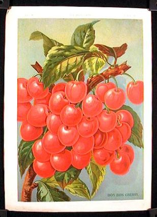 Bon Bon Cherry. FRUIT - CHERRIES