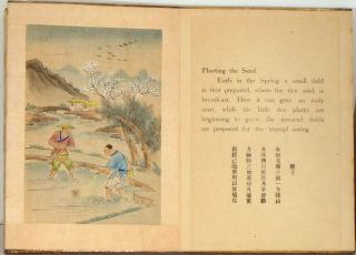 The Story of Rice. CHINA - RICE - WATERCOLOR PAINTINGS