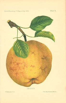 Idaho. PEAR