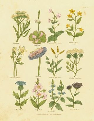 Samphire. Sun Dew. Short leaved Tobacco. Small Tobacco. White Saxifrage. Scabious. English...