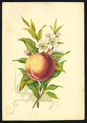Fruits from the Garden and Field. [Eleven chromolithographs of fruit and flowers].