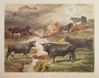 Dairy Farming: Being the Theory, Practice, and Methods of Dairying. CHROMOLITHOGRAPH...