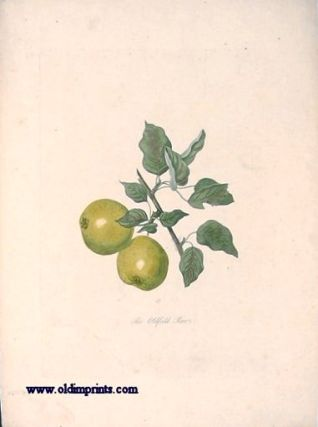 The Oldfield Pear. PEAR