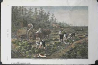Gathering the Water-Melon - A Scene in the Sunny South. AGRICULTURE - WATERMELONS