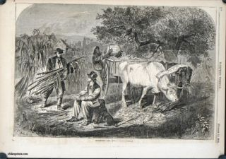 Gathering Corn. BLACK AMERICANA