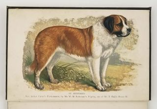 The St. Bernard: Its History, Points, Breeding and Rearing. DOGS - SAINT BERNARD, Hugh Dalziel