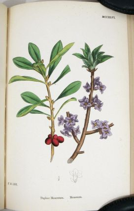 English Botany; or, Coloured Figures of British Plants. Volume VIII. Chenopodiaceae to Coniferae....