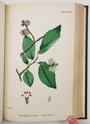 English Botany; or, Coloured Figures of British Plants. Volume VIII. Chenopodiaceae to Coniferae. Cover title: Sowerby's English Botany.