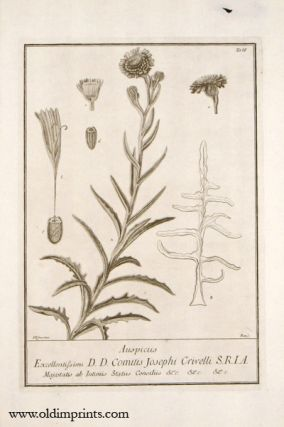 Auspiciis - PAIR OF 18TH CENTURY COPPERPLATE ENGRAVED BOTANICAL PRINTS. BOTANICAL ENGRAVINGS.
