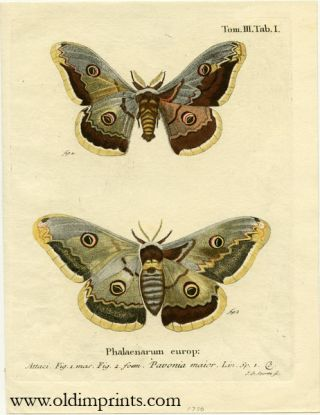Phalaenarum europ. ENGRAVING - BUTTERFLY / MOTH