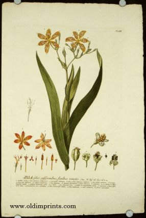Ixia foliis ensiformibus, floribus remotis. [ANTIQUE BOTANICAL]. IXIA, Christopher Jacob Trew,...