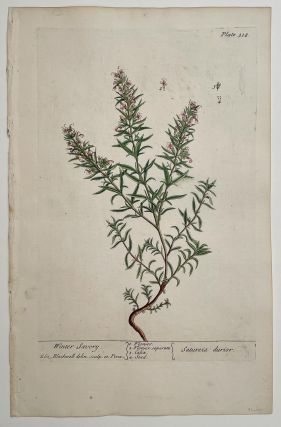Winter Savory. Satureia durior (from A Curious Herbal). EIGHTEENTH CENTURY hand colored botanical engraving.